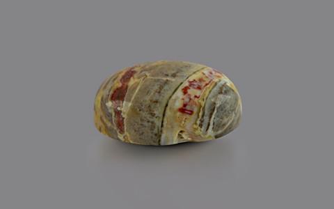 Petrified Wood - 8.07 carats