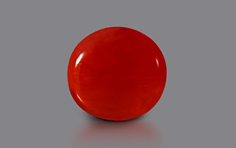 Red Coral - 2.59 carats