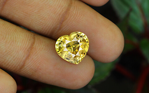 Yellow Sapphire - 7.01 carats