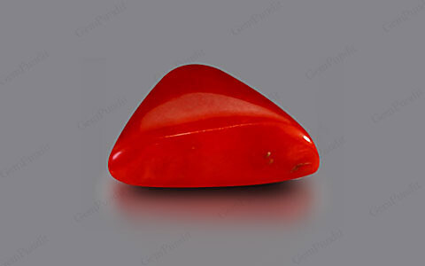 Red Coral - 4.30 carats