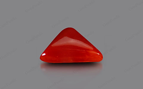 Red Coral - 4.31 carats