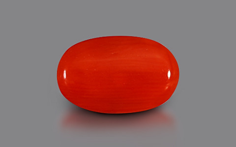 Red Coral - 3.82 carats