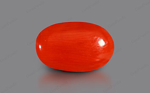 Red Coral - 3.37 carats