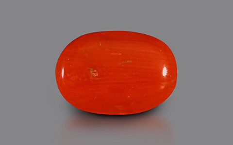 Red Coral - 3.10 carats