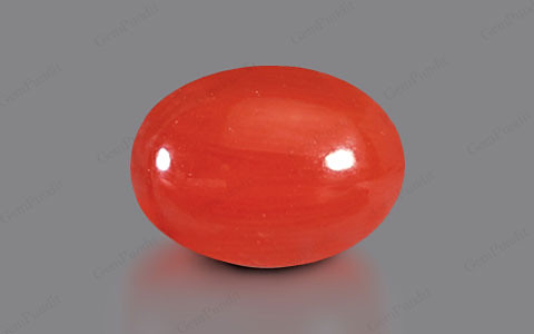 Red Coral - 3.26 carats