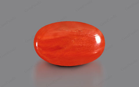 Red Coral - 3.43 carats