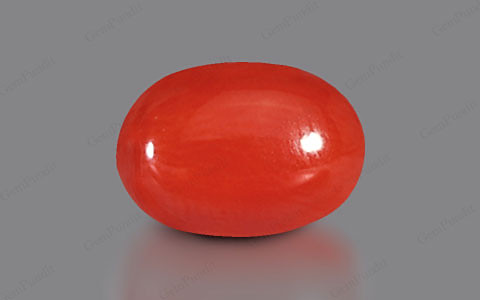 Red Coral - 3.23 carats