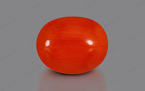 Red Coral - 3.33 carats