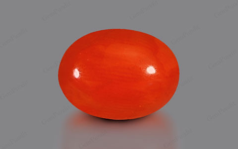 Red Coral - 3.63 carats
