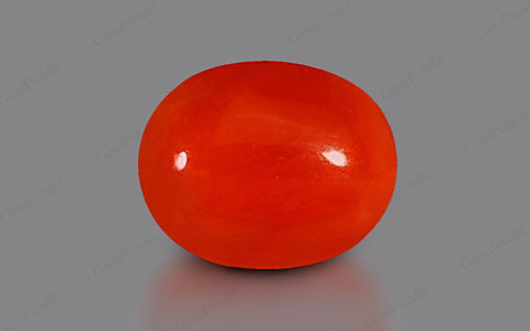 Red Coral - 3.16 carats