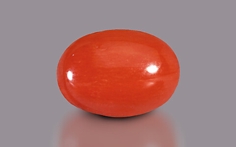 Red Coral - 3.05 carats