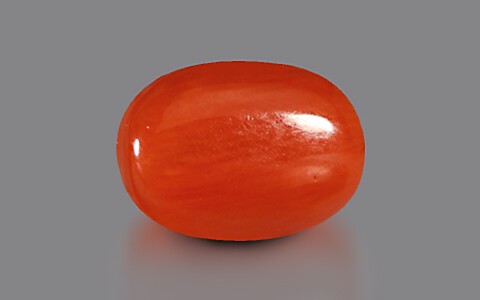 Red Coral - 3.78 carats