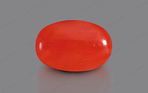 Red Coral - 3.27 carats