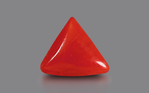 Red Coral - 2.06 carats