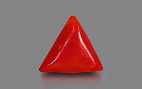 Red Coral - 3.65 carats