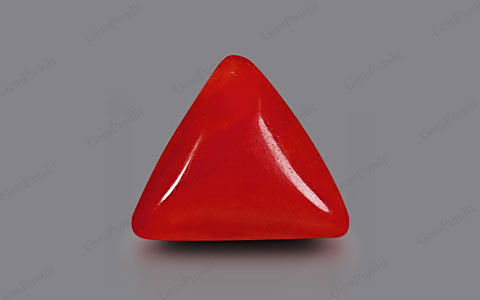 Red Coral - 2.33 carats