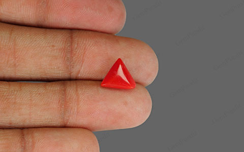 Red Coral - 2.37 carats