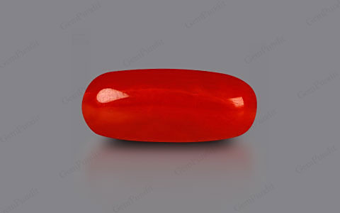 Red Coral - 2.17 carats