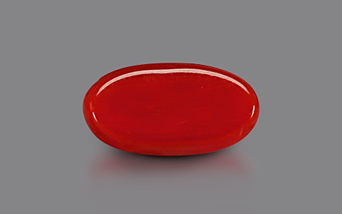 Red Coral - 3.30 carats