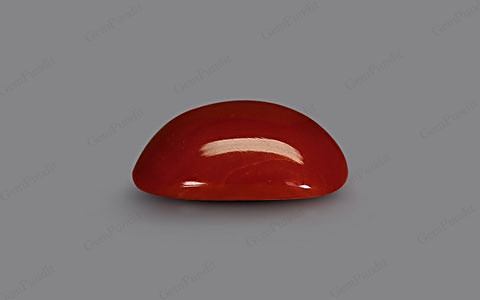 Red Coral - 6.23 carats