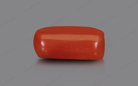 Red Coral - 2.82 carats