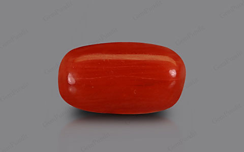 Red Coral - 2.41 carats