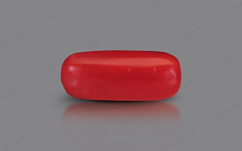 Red Coral - 2.24 carats