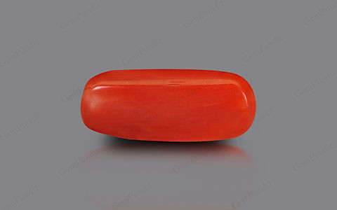 Red Coral - 1.95 carats