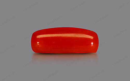 Red Coral - 9.39 carats