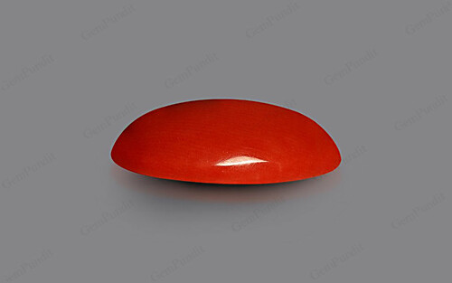 Red Coral - 6.33 carats