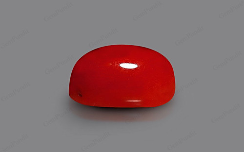 Red Coral - 8.15 carats
