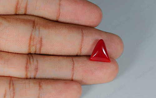 Red Coral - 5.34 carats