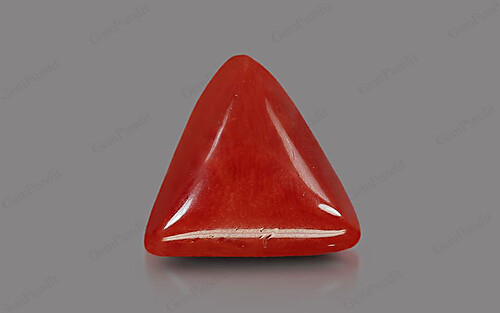 Red Coral - 8.41 carats