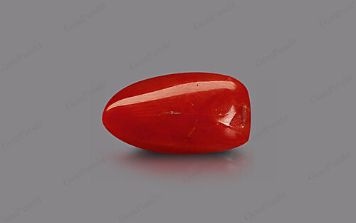 Red Coral - 8.61 carats