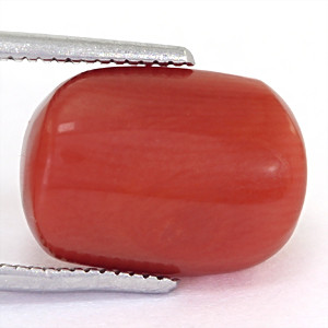 Red Coral - 7.35 carats