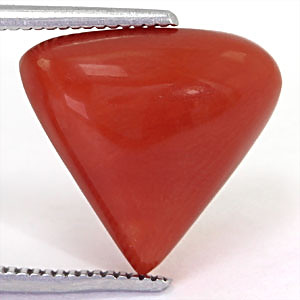 Red Coral - 6.79 carats