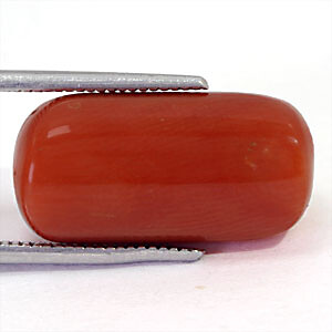 Red Coral - 14.51 carats