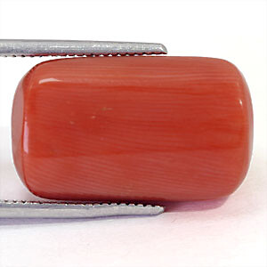 Red Coral - 17.51 carats