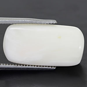 White Coral - 11.65 carats