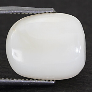 White Coral - 9.80 carats