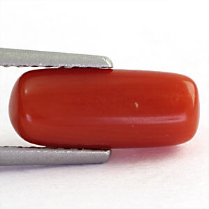Red Coral - 2.05 carats