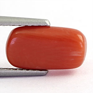 Red Coral - 1.90 carats