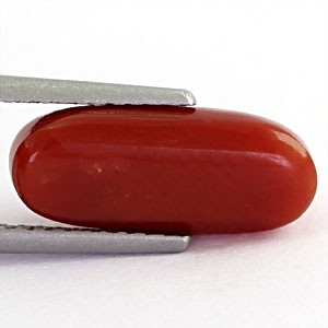 Red Coral - 3.49 carats