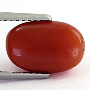 Red Coral - 3.61 carats