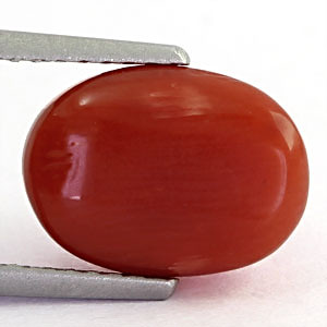 Red Coral - 3.14 carats