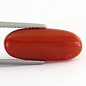 Red Coral - 5.79 carats