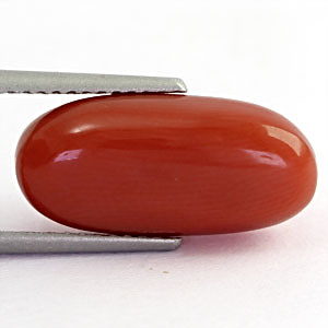 Red Coral - 6.71 carats