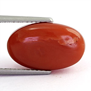 Red Coral - 6.34 carats