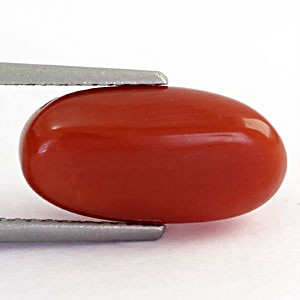 Red Coral - 4.54 carats