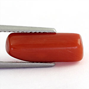Red Coral - 3.64 carats